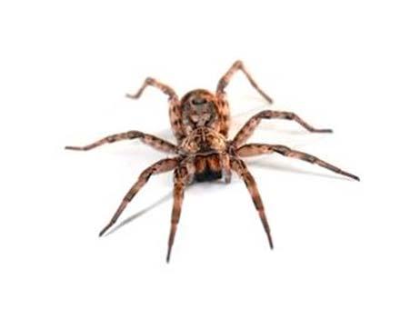 Empresa de fumigación de plagas de arañas en Barcelona