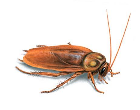 Empresa de fumigación de plagas de cucaracha en Barcelona