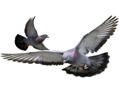 Empresa de fumigación de plagas de aves y palomas en Barcelona